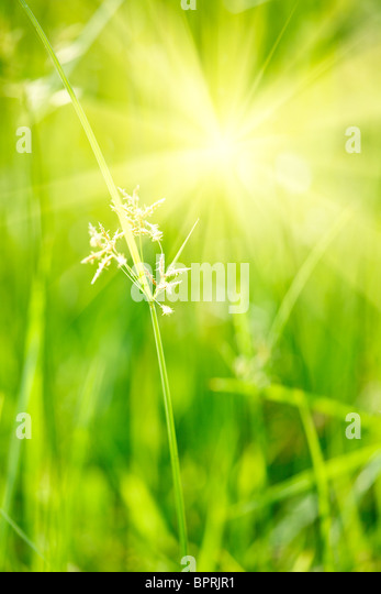 Green grass - shallow depth of field - Stock Image