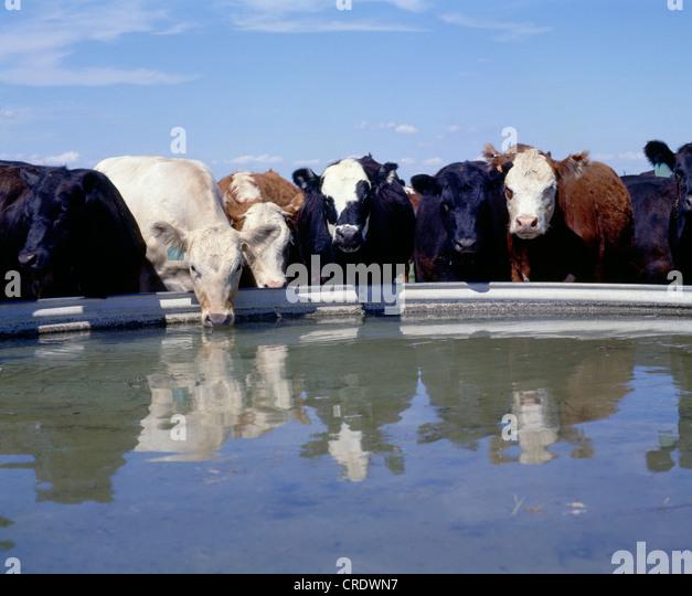 Alpine Drinking Water Kenya