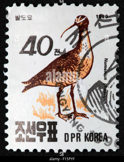 Numenius Phaeopus Bird DPR Korea 40 Numenius stamp - Stock Image