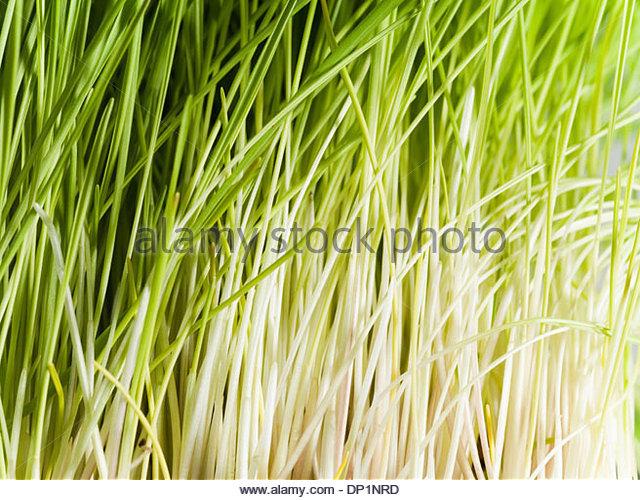 Grass - Stock Image