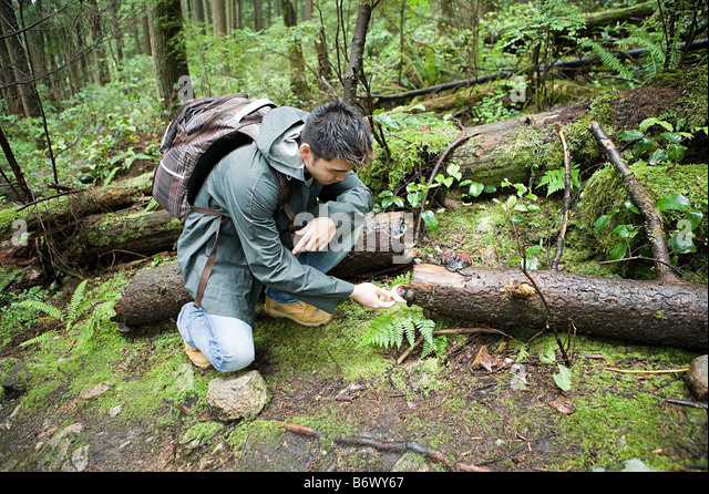 Man looking at fungus in forest - Stock Image