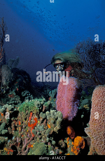 St Lucia  underwater anse chastanet reef sport diving - Stock Image