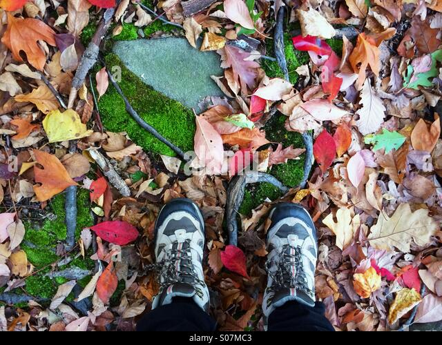 Looking down in autumn while hiking with fall foliage, moss and roots underfoot in New Jersey, USA - Stock Image