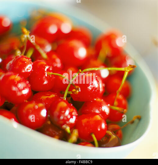 berry bowl catalogue 2 cherry close-up color image detail fruit fruits and vegetables red square Swedish catalogue - Stock-Bilder