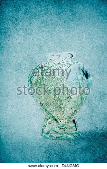 Beach grasses in a glass bottle on textured background - Stock Image