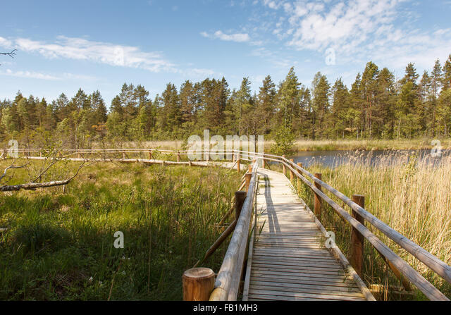 Purpose Planks Walkway : Plank wood pathway stock photos