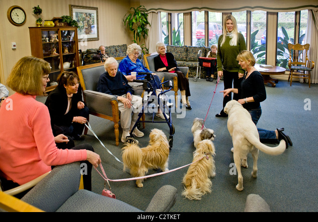 therapy dogs in nursing homes pdf