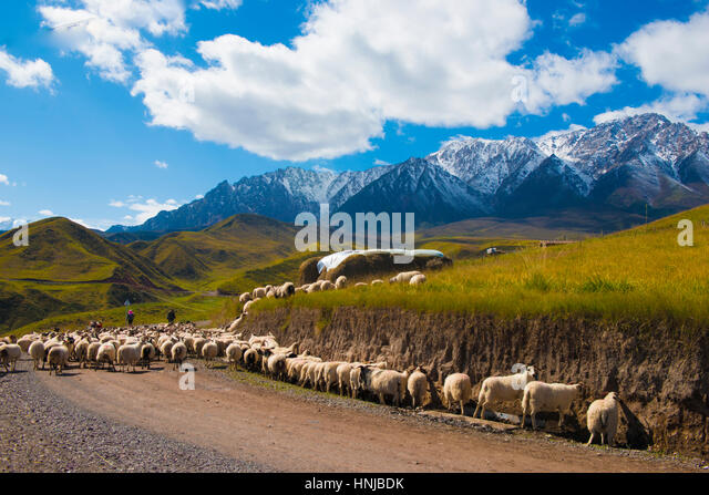 Sheep and herders in Qilan Mountains, Gansu Province, China, Western China near Silk Route - Stock-Bilder