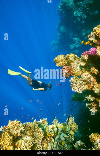 Woman snorkeling underwater, Coral Reef, Blue Hole near Dahab, Red Sea, Egypt - Stock Image