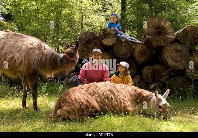 Family Lama Trekking in the Forest of Dean G - Stock-Bilder