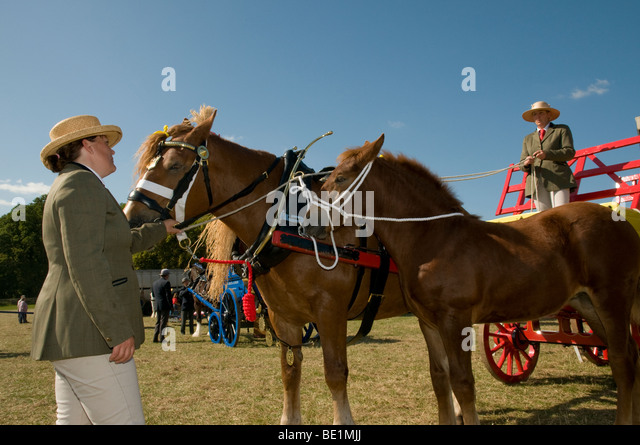 The Henley Show ,work class horse event - Stock Image