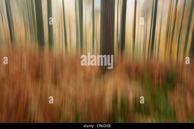 Maundown Plantation near Wiveliscombe. Somerset. England. UK. - Stock Image