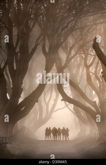 Shadow People under the Dark Hedges, Northern Ireland. - Stock-Bilder