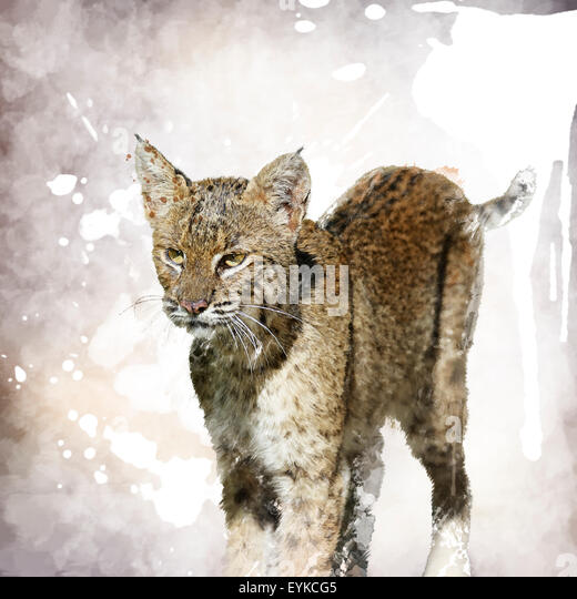 Digital Painting Of Bobcat Portrait - Stock Image