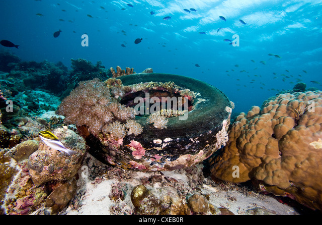 Coral encrusted tyre at Nalusuan Marine Sanctuary, Cebu, Philippines, Southeast Asia, Asia - Stock Image