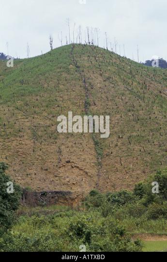 DEFORESTATION ON HILLSIDE IN VIETNAM - Stock Image