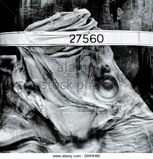 Labeled fish specimens preserved in glass jars, London, England. - Stock Image
