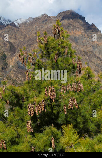 Landscape View Mountains Hiking Himalayas.Beautiful End Summer Season Background.Vertical Photo.Green Three Cloudy - Stock Image