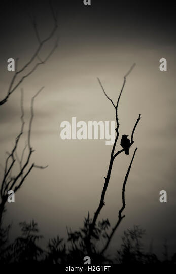 Bird and dark silhouette of tree. Moody and ominous nature scene. - Stock-Bilder
