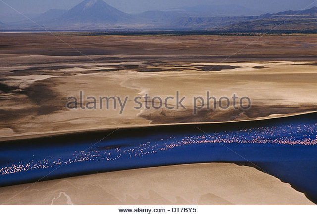 Flamingos in flight at Lake Natron An aerial view on a flock in the air in a long line over water Kenya Kenya - Stock Image