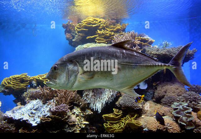 Observatory Marine Park Stock Photos & Underwater Observatory Marine ...