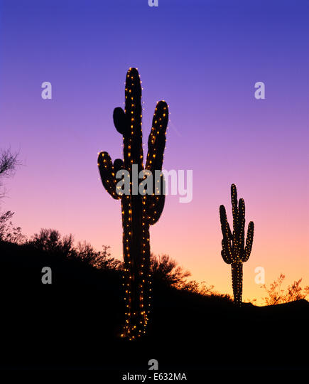 Cactus Decorated For Christmas: Christmas Decorated Cactus Stock Photos & Christmas