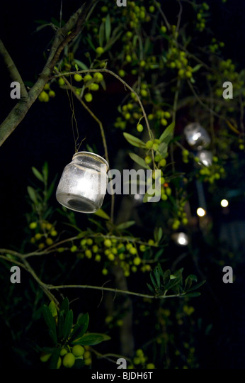 Candles in glass jars hanging from olive trees - Stock Image