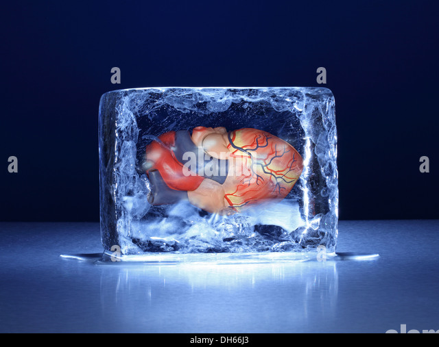 A model of the human heart frozen in a clear block of ice - Stock Image