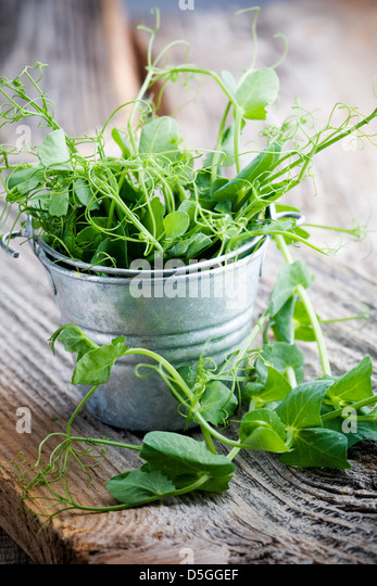 Fresh pea sprouts in little bucket, selective focus - Stock Image