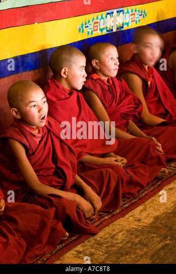 Young Monks and Monks of the Gelupa Order during Puja - Likir Gompa - Ladakh - Indian Himalaya - Stock-Bilder