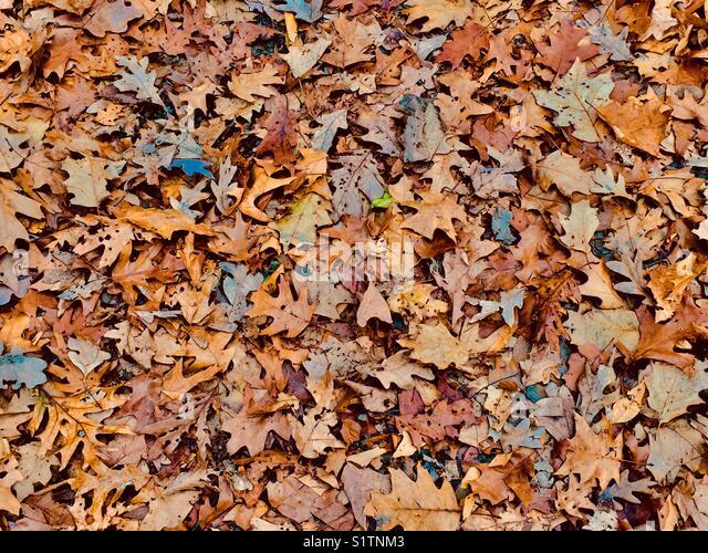 Fallen Leaves - Stock Image