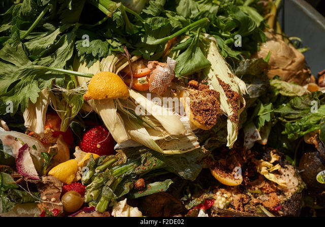 A food waste collection bin at the Union Square Greenmarket, Manhattan, New York City, USA - Stock Image