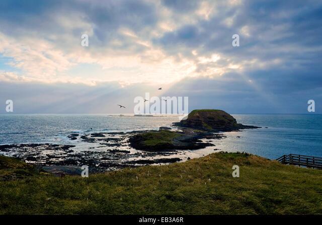 Australia, Phillip Island Nature Park, Rocky shoals seen from grassy shore - Stock Image