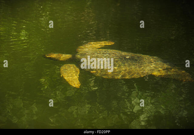 Santa Cruz Island Galapagos Turtle Stock Photos & Santa ...