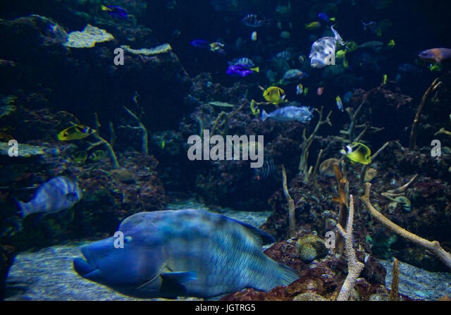 Colorful small tropical fish swim stock photos colorful for Jan s tropical fish