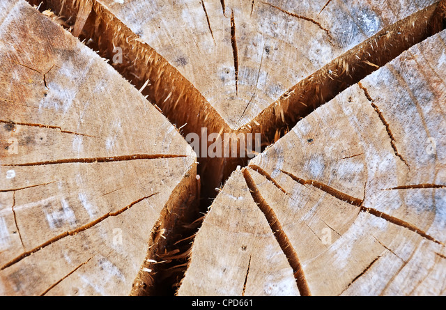 Old cracked tree stump - Stock-Bilder