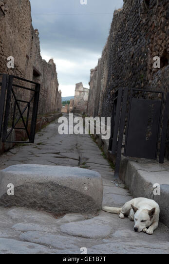 A dog sleeps on one of the stone streets of Pompeii, Italy. - Stock Image