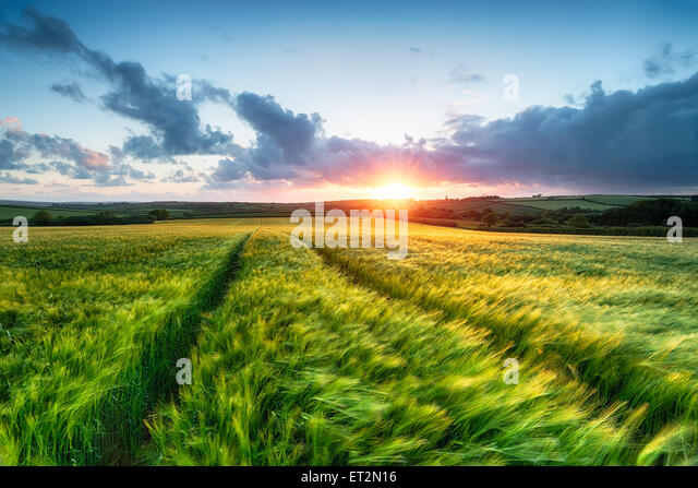 Sunset over farm land with barley blowing in the breeze - Stock Image