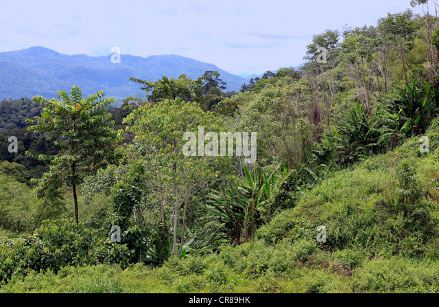 Southeast asian rain forest 3012