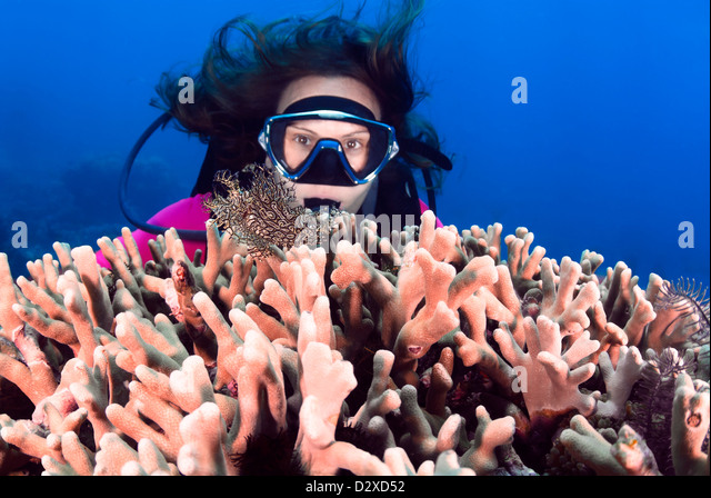 Lacey Scorpionfish aphanes with a Female Diver, Great Barrier Reef, Queensland,  Australia, Coral Sea, Pacific Ocean - Stock Image