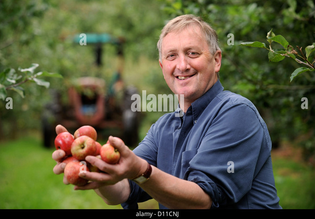 Cider making farmer Mike Johnson at Broome Farm near Ross-on-Wye UK where there is free camping and tasting to volunteer - Stock Image