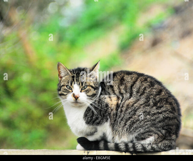 Portrait of sweet tabby cat - Stock Image