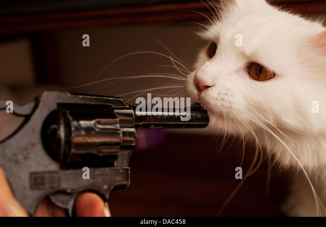 Brave cat - Stock Image