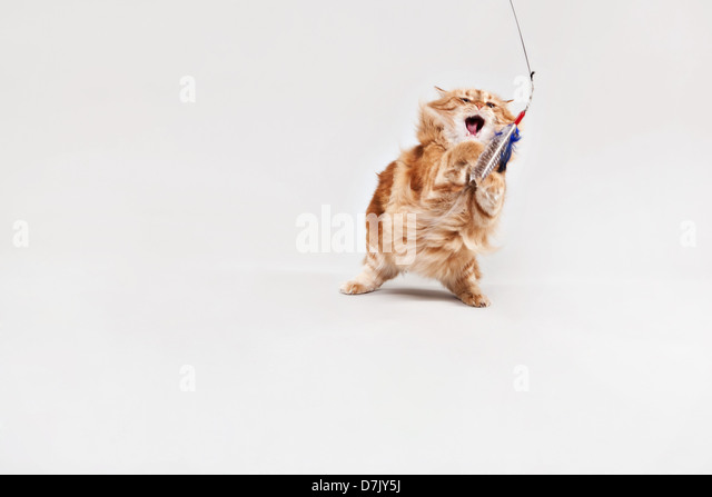 Animated cat playing with toy against white background - Stock Image