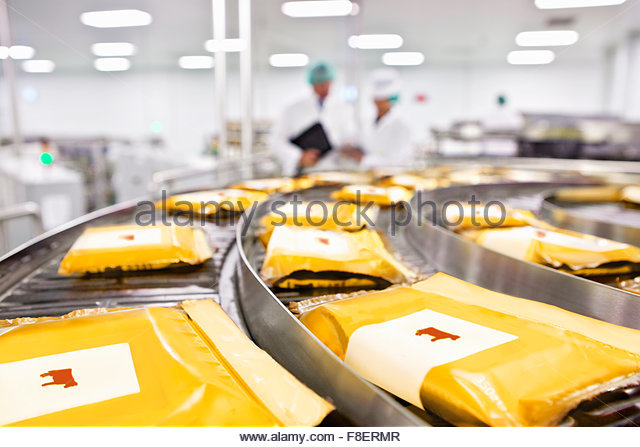 Cow labels on packages of cheese on conveyor belt in processing plant - Stock Image