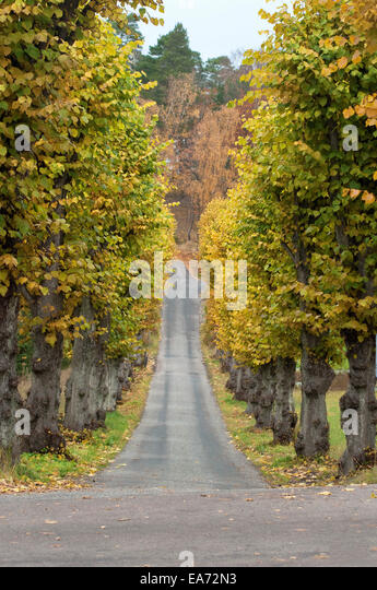 Autumn Avenue of Trees - Stock Image
