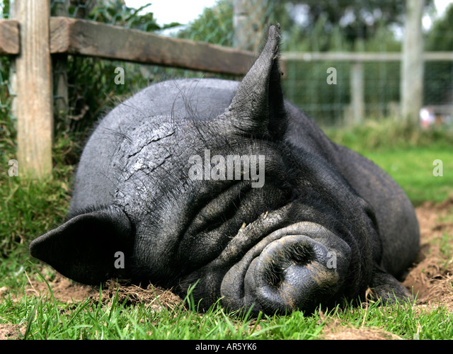Bellied Stock Photos & Bellied Stock Images - Alamy