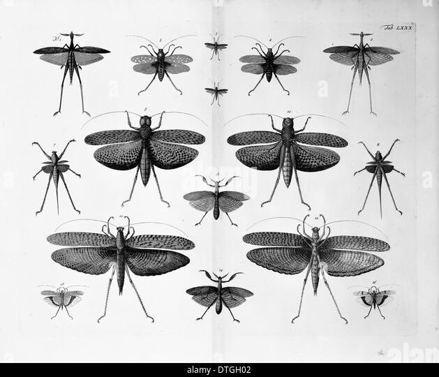 Insects illustration - Stock Image