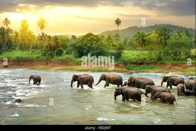 Herd of elephants walking in a jungle river - Stock-Bilder