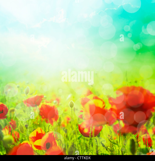 Summer field of corn poppy flowers with bokeh - Stock Image